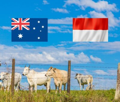 Challenges and Opportunities in the Australia-Indonesia Cattle Trade: John Cunnington